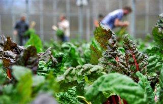 Nieuwe+boeren+op+nieuwe+gronden+in+Vlaanderen