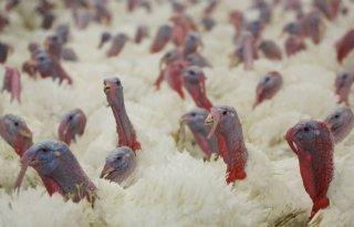 Duitsland sluit vogelgriepuitbraak af