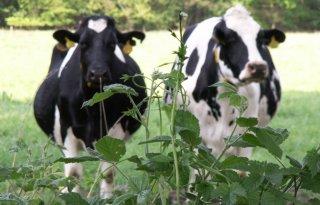 Per ton melk 1.200 kilo CO2-uitstoot