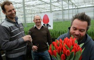 Nieuwe tulp krijgt naam: Man