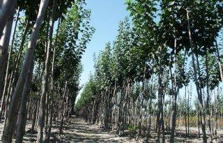CBS: boomkwekerij groeide gemiddeld flink