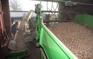 Verwerking aardappelen zakt terug