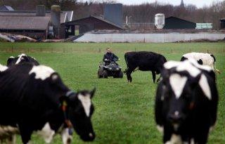 Dijksma: alle koeien weidegang niet haalbaar