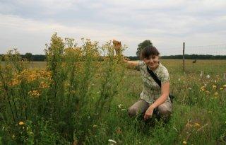 'Buurplant' bepaalt waar insect eet