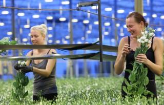 Tuinbouw vreest wegblijven Poolse arbeidsmigrant