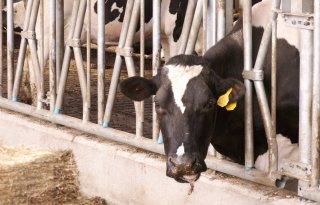 FrieslandCampina+loopt+in+bij+melkprijzen