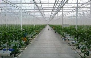 Verdere+daling+CO2+uitstoot+glastuinbouw