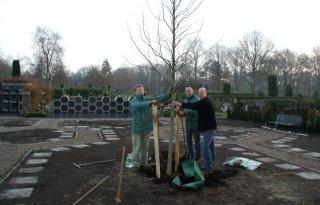 Nieuwe+boom+voor+begraafplaats+Almelo