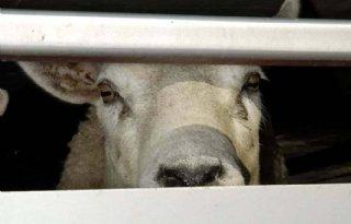 'Handhaving werkt tegen dierverwaarlozing'