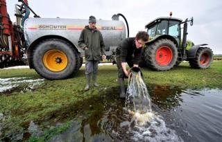 Weidevogelstand+Friesland+staat+onder+druk