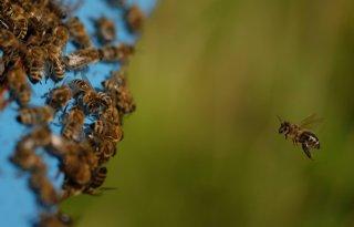 Wintersterfte+bijen+niet+door+imidacloprid