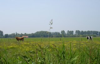 In biolandbouw 30 procent meer biodiversiteit