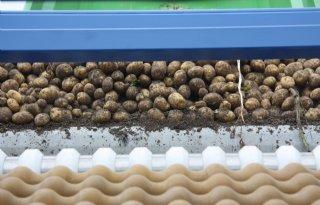NEPG%3A+snelle+groei+aardappelproductie