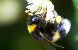 %27Dichtbij+de+bijen%2C+zonder+te+storen%27
