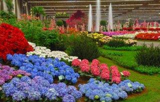 Jorritsma+opent+wereldexpo+Florali%C3%ABn