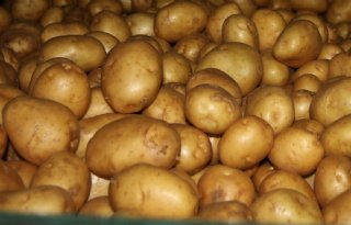 Actuele aardappelmarkt bereikt bodem