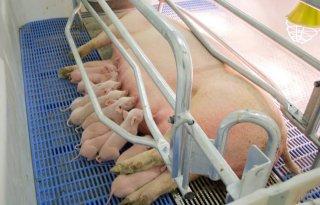 Gelderse fracties: geen ingrepen dieren