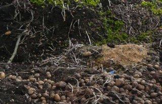 Intensieve controle op afdekken afvalhopen