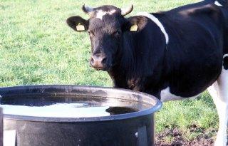 NVWA%3A+drinkwater+en+schaduwplek+verplicht