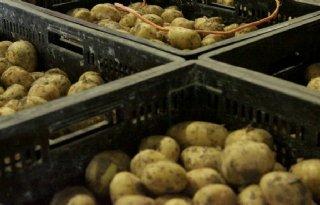 Veiling+vroege+aardappelen+start+donderdag