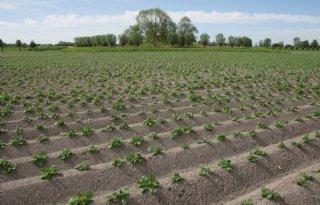 NEPG: zeer grote aardappeloogst