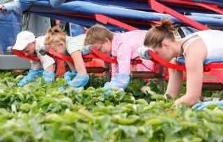 Groei biolandbouw in Nederland blijft achter