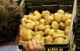 Dinsdag eerste veildag vroege aardappelen