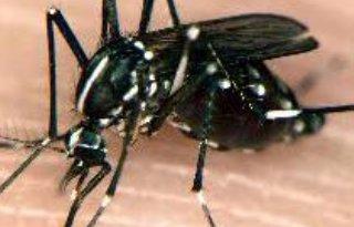 Bestrijding exotische muggen wordt Rijkstaak