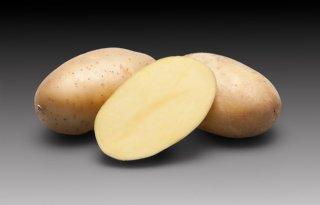 ABCDE-resistent aardappelras voor Schaap