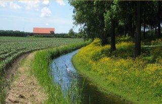 Dijksma%3A+Buijtenland+creatief+invullen