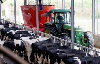 Dijksma: meer fosfaat door melkvee
