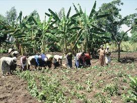 Handelsmissie+Ploumen+in+Nigeria+en+Ghana