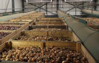 Agrifirm Plant: bewaarpool uien 18,50 euro