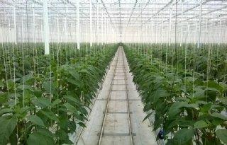 %27Eerst+een+klant%2C+dan+een+plant%27