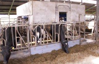 Koeien+en+Kansen%3A+stikstof+37+procent+benut