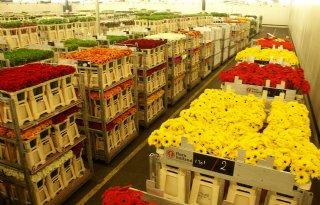 Evenaring+exportrecord+bloemen+en+planten