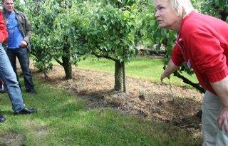 Spuiwater bestrijdt onkruid in boomgaard