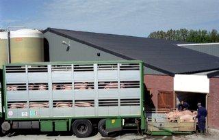 Meer marktinfo voor Belgische varkensboer