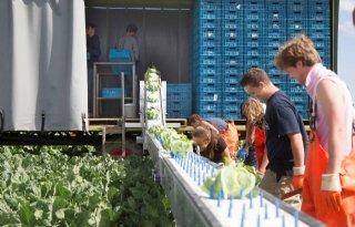 Subsidie biologische landbouw Groningen in trek