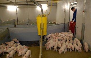 'Iedere varkenshouder zijn eigen apotheek'