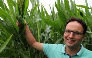 Pluim in eerste maïs meetnet