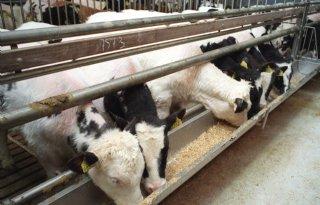 NVM%3A+herschikking+vleeskalversector
