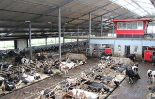 LTO: 30 miljoen euro voor vitalere veehouderij