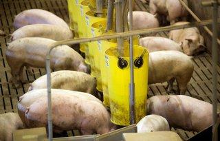 CVB+herziet+energiewaardering+varkens