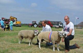 Eelman+kampioen+schapenkeuring+Texel