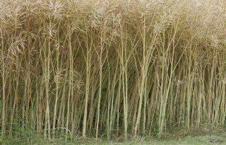 Duitsland: 4,1 ton koolzaad per hectare