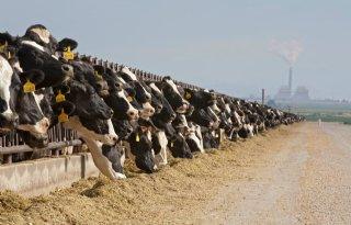 Amerikaanse rundveestapel groeit