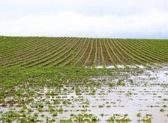 Limburgse boeren claimen waterschade