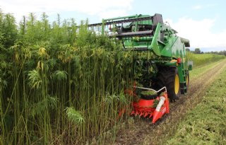 HempFlax oogst hennepzaad in Roemenië