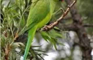 'Tientallen soorten ontbreken op exoten-lijst'